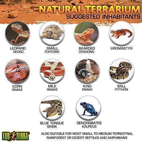Exo Terra Natürliches Terrarium aus Glas - 5