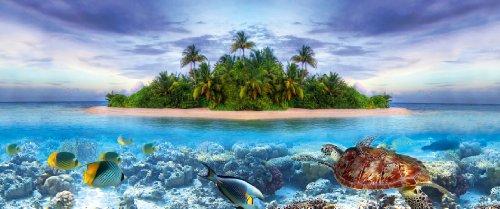 Tetra Repto Aqua Set – Komplettset – für Wasserschildkröten - 6