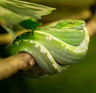 terrariumtiereschlange